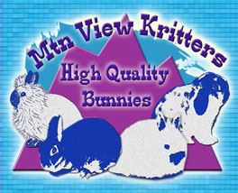 holland lops, jersey wooly pet bunnies